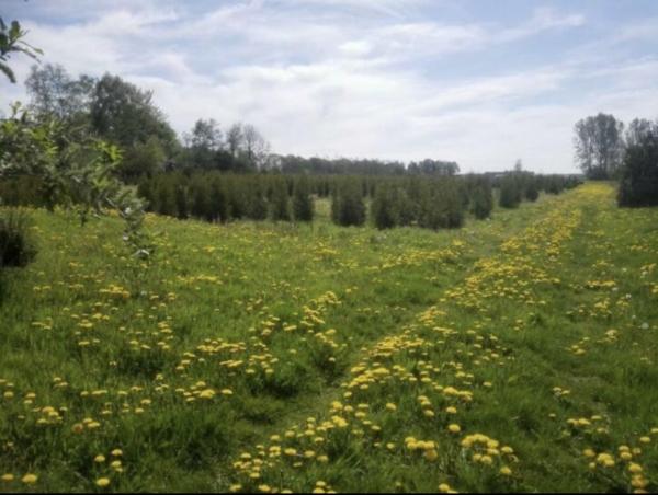 Coniferen (meerdere soorten) , buxus , jeneverbes