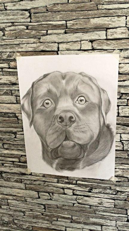 Tekening hond