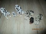 6 Beelden hondjes kwalitieit van setter mode